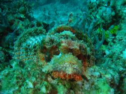 raggy scorpionfish maumere Sony T30 by Chin2 Law