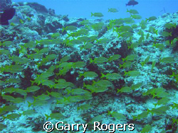 Taken in Cozumel with Sea & Sea DX-8000G with wide angle ... by Garry Rogers