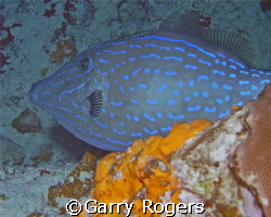 Taken on a night dive in Cozumel. Sea & Sea DX-8000G by Garry Rogers
