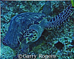 In Cozumel in an area called Palancar Caves at about 97 f... by Garry Rogers
