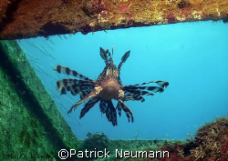 Coming through the window, taken at a wreck near Hurghada... by Patrick Neumann