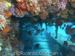 Marine life taking full advantage of Crashboat's fallen p... by Ricardo Guzman