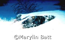 Eyes of a stingray peek out of the sand.  Nikonos V 28mm ... by Marylin Batt