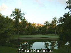 Palmas Del Mar Golf,palmas ,Humacao Puerto Rico Camera DC310 by Pedro Hernandez