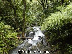 El Yunque Rainfores,Rio Grande , Puerto Rico. Camera DC310 by Pedro Hernandez