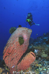 Diver with sponge,Sipadan Island.Nikkor 12-24mm Dx by Tunc Yavuzdogan