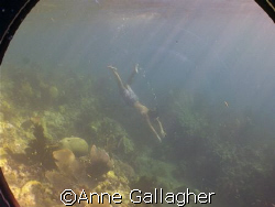 My friend diving over a reef in St. Lucia. A still lifted... by Anne Gallagher