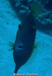 This is a Orange filefish one of the coolest little fish ... by Heather Dugmore