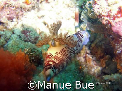Nudibranch bum! by Manue Bue