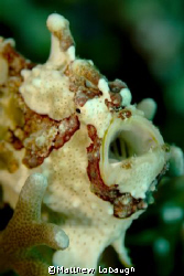 Frog Fish Taken in March at the Wakatobi Dive Resort. by Matthew Lobaugh