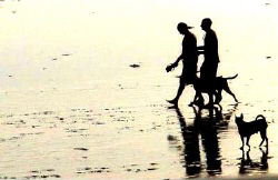 Beach boys and beach dogs in Bali by Steve Kuo