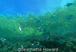 Solomon Islands, at the edge of the reef looking up at th... by Jeannette Howard