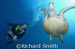 Diver and turtle off Sipadan by Richard Smith