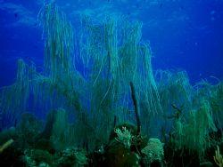 Deep Blue Willow, Key Largo, Nikon CP5000 by Ken Dean