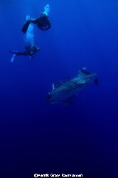 Divers with Whaleshark, at Brothers Island. NikonD70, nat... by Henrik Gram Rasmussen