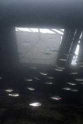 Stoney cove dive centre. D200, 16mm. by Derek Haslam