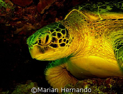 Turtle city, Bunaken, Manado by Marian Hernando