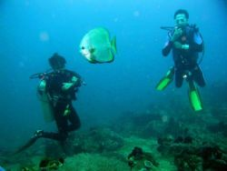 2 divers and a batfish, Anilao, Batangas, Philippines, Ol... by Luigi Abad Santos