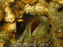 taken at house reef, waiting for quite sometimes to get q... by Mulwardi Tjitra