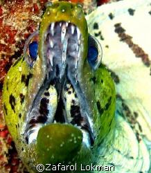 Scary mate's.....taken in Redang Island Malaysia..using C... by Zafarol Lokman