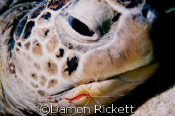 Turtle in for a check up by Damon Rickett