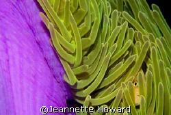 Peek-a-boo!  by Jeannette Howard