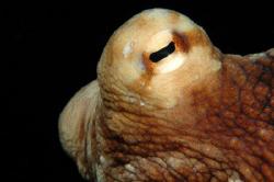 Octopus.  Nikon D70. by David Heidemann