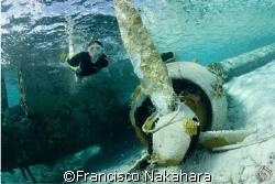 Flying under the sea... by Francisco Nakahara