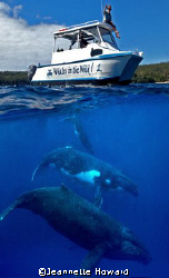 Whales in the Wild! by Jeannette Howard