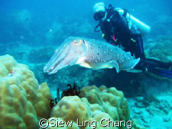 Posing with the cuttlefish at Labas, Tioman by Siew Ling Chang