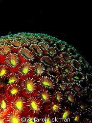 The Coral.. by Zafarol Lokman