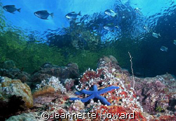 Above and Below....Love the BLUE!   by Jeannette Howard