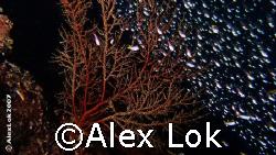 novices by Alex Lok