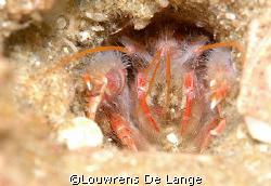 Hidey hole by Louwrens De Lange