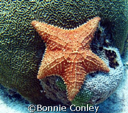 Stafish seen at Isla Mujeres.  Photo taken this April wit... by Bonnie Conley