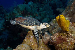 Turtle at lunch by Andy Lerner