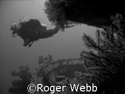 """dive on the 'Shakem"""" by Roger Webb"""