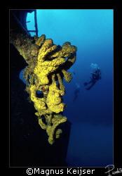 Hilma Hooker, at Bonaire. Equipment used: Nikon F801, Si... by Magnus Keijser