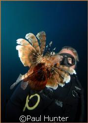 Firefish, taken at Sodwana by Paul Hunter