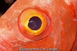 I've got my eye on you by Louwrens De Lange