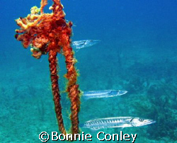 Just hanging around at Isla Mujeres.  Photo taken April 2... by Bonnie Conley