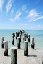 Photo is taken in Florida with Nikon D80 by Andy Kutsch