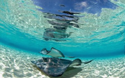 Stingrays in Cayman by Andy Lerner