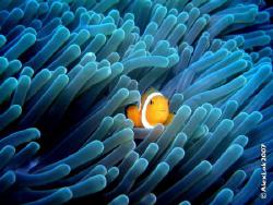 Finding Nemo by Alex Lok