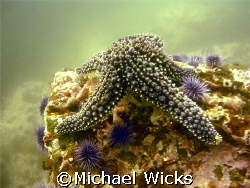 This was on a dive that was off the Santa Cruz Islands.  ... by Michael Wicks