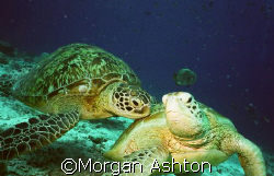 A shoulder to lean on. Sipadan.  by Morgan Ashton