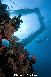 Beautifully overgrown wreck with diver in Lhavijani Atoll... by Barbara Schlilling