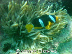 Taken in Fujirah near shark island,, not a good quality b... by Ahmed Elsayed