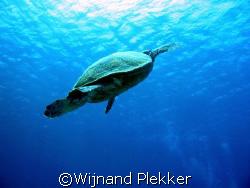Turtle @ Sharm by Wijnand Plekker