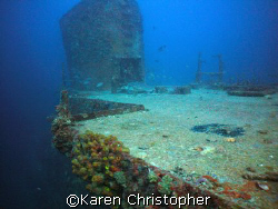 The SS Duane, Key Largo, Florida. A turtle rests near the... by Karen Christopher